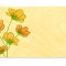 Cosmos Place Card: Apricot