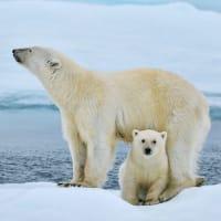 Svalbard ekspeditionskrydstogt