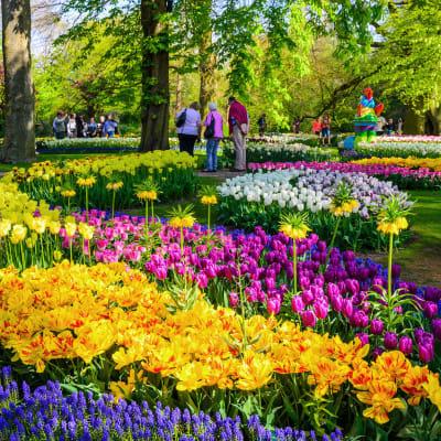 Holland i blomst - Delden