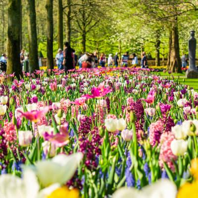Holland i blomst - Markelo