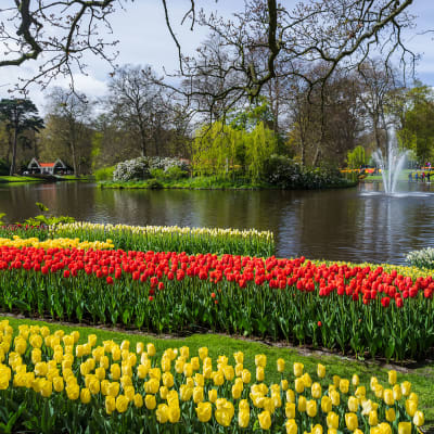 Holland i blomst - Putten
