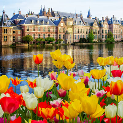 Blomsterkrydstogt i Holland og Belgien