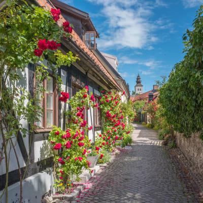 Gotland og Øland - øhop i Sverige
