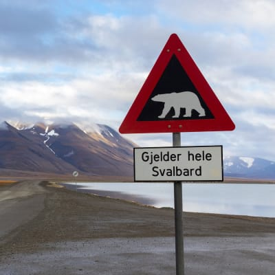 Svalbard - polarsommer og midnatssol