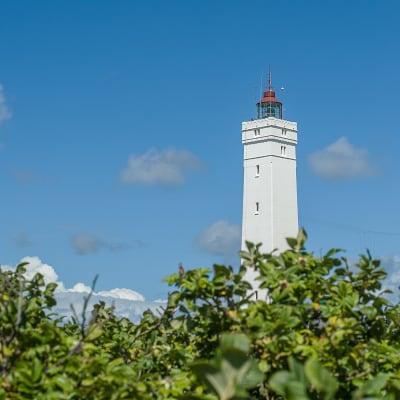 Fanø - Rømø og Vadehavet