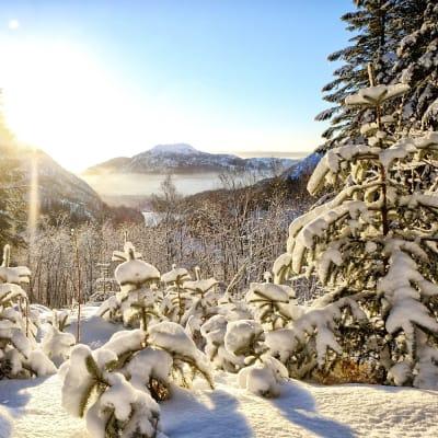 Jul i Norge - Telemarken