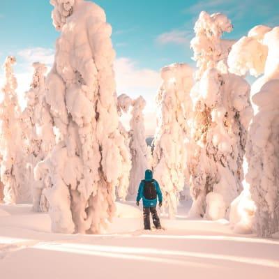 Nordlyseventyr i Lapland