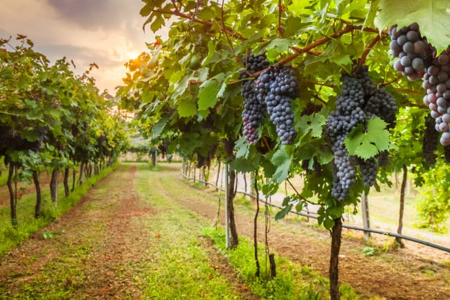 Røsnæs og vingårdsbesøg