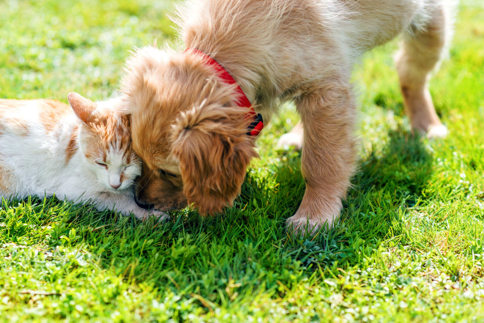 picture of puppy and kitten playing together