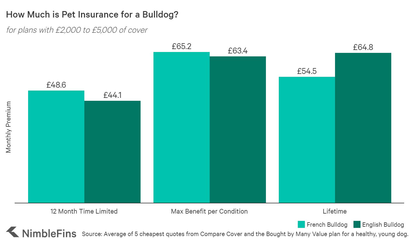 Chart showing the average cost of Bulldog insurance