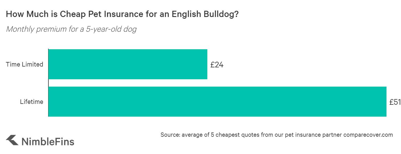 Chart showing the average cost of English Bulldog insurance