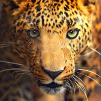 Animal Attraction-Part 1, ms.jaxn