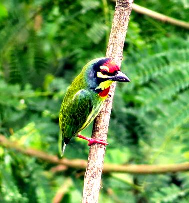 Bird-watching-Front