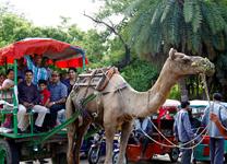 Delhi-Pushkar4