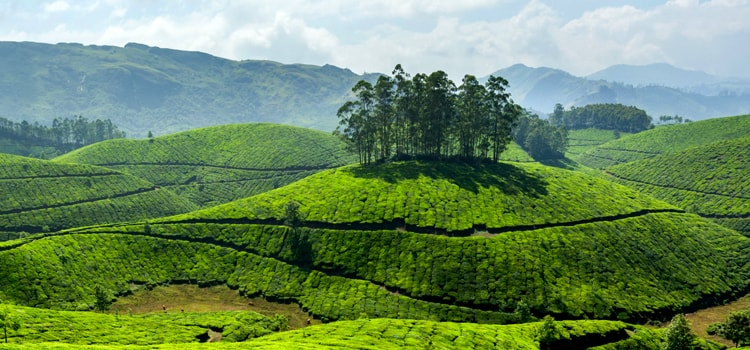 Munnar-Packages