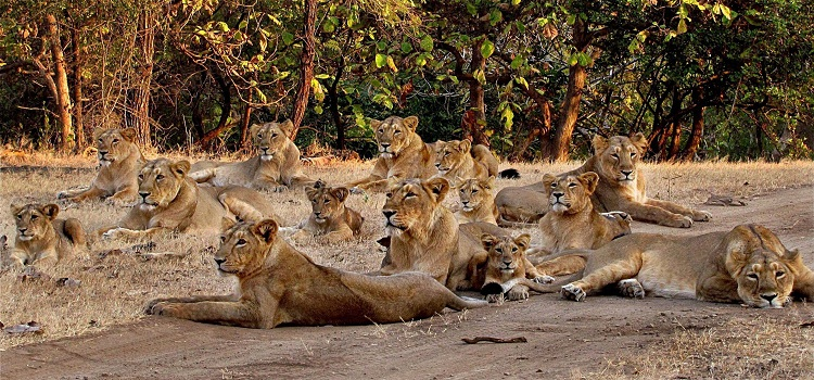 Gir-National-Park-Gujarat