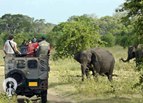 Corbett-holiday-packages