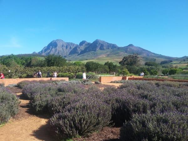 Fruit-picking in Babylonstoren, South Africa