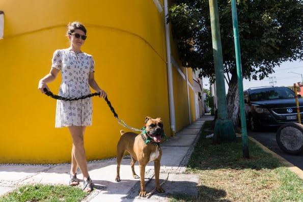 walking our hosts dog luna