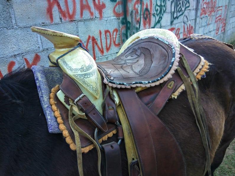 the saddles