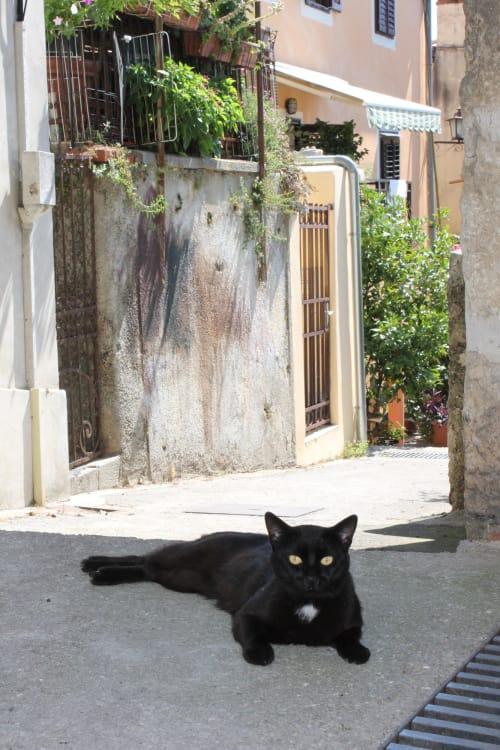 cat in volosko