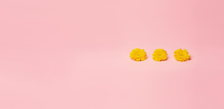 3 stk gule blomster på rosa bakgrunn
