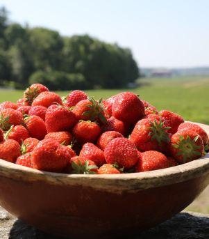 Jordbær fra Oslo og Akershus