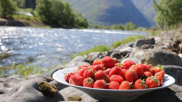Jordbær fra Sogn og Fjordane