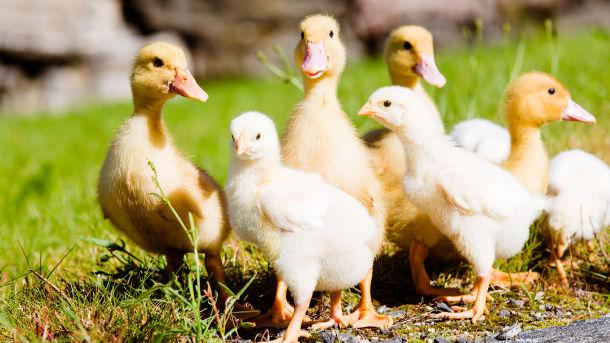 Holte gård - med fokus på dyrevelferd og økologisk