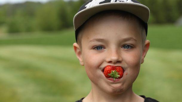 Jordbær fra Østfold