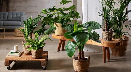 Friske, grønne planter i terracottapotter