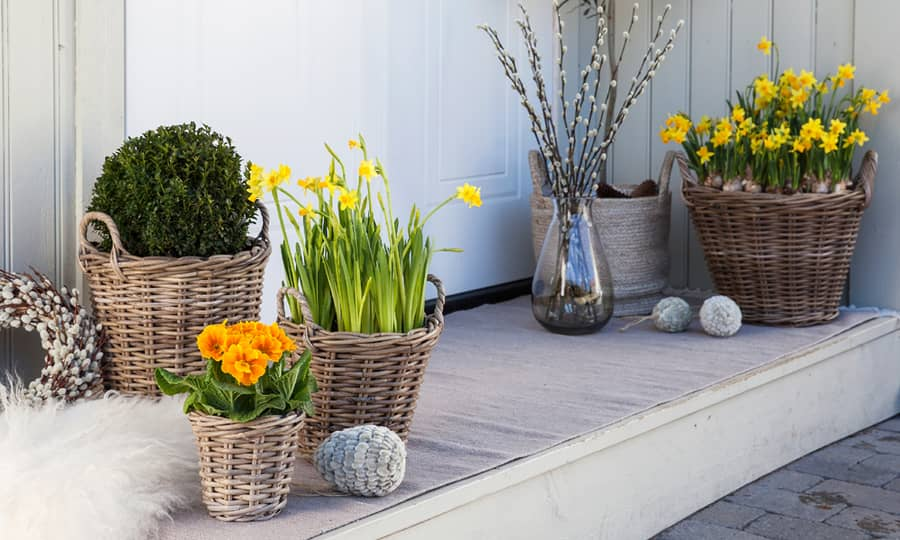 Friske vårblomster som skinner om kapp