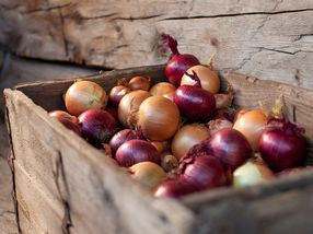 Grove grønnsaker og fiber