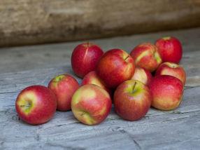 Høstens fruktfat med norske skatter