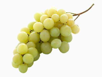Muskatell druer