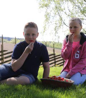 Jordbær fra Hedmark