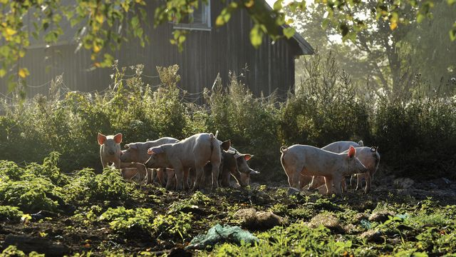 Norges største økologiske utvalg