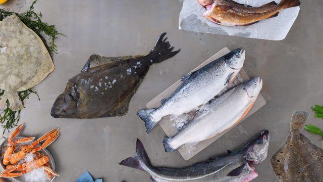 Den store guiden til fiskedisken