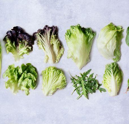 """Illustrasjonsbilde for """"Salatskolen"""""""