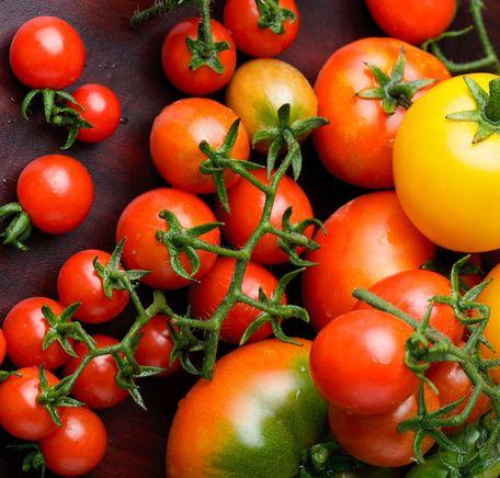 """Illustrasjonsbilde for """"Tomatskolen"""""""