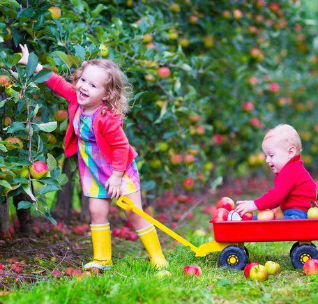 """Illustrasjonsbilde for """"Mange epler, mange smaker"""""""