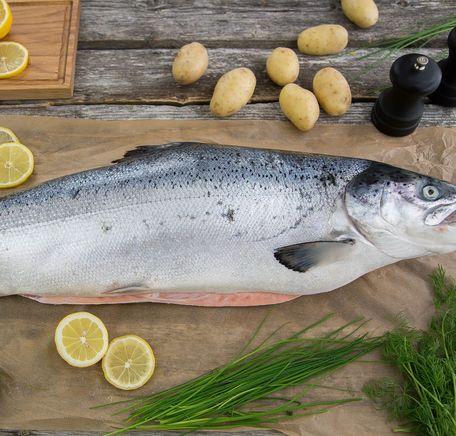 """Illustrasjonsbilde for """"Urteguide til fisk – slik setter du prikken over i-en"""""""