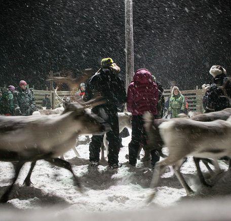 """Illustrasjonsbilde for """"De åtte samiske årstidene"""""""