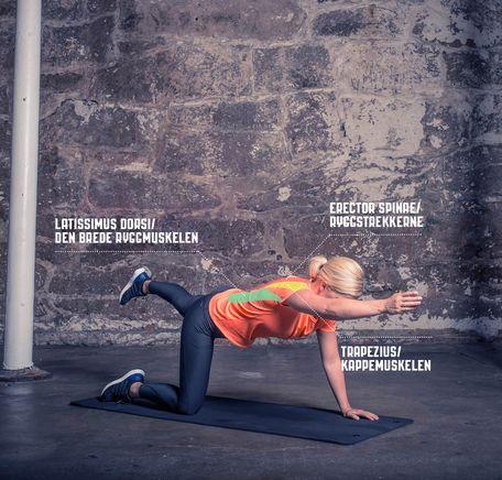 """Illustrasjonsbilde for """"Slik er ryggmuskulaturen"""""""
