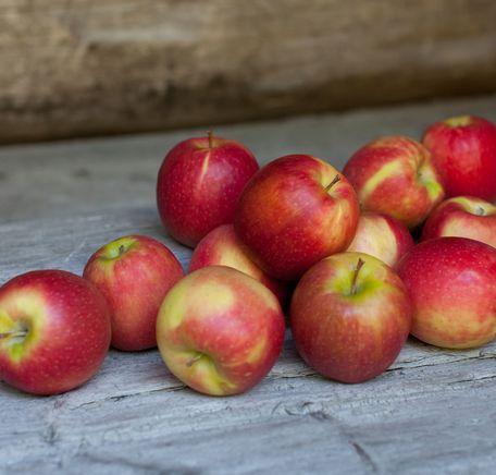 """Illustrasjonsbilde for """"Høstens fruktfat med norske skatter"""""""