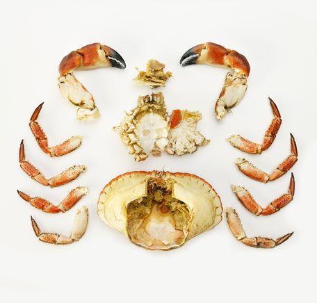 """Illustrasjonsbilde for """"Rensing av krabbe"""""""