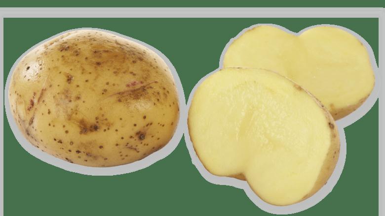Når kom poteten til norge