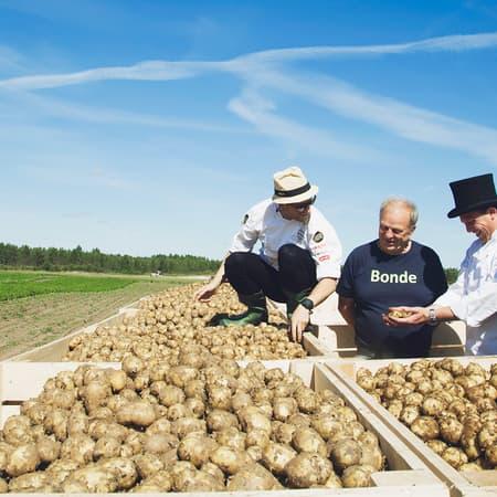 Allsidige poteter