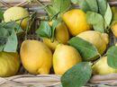 Verdens beste sitron – Amalfi