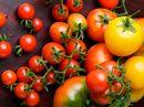 Tomaten - allsidig og supersunn